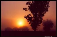 Ochoa Foggy sunrise